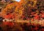 【美妙的近义词】美妙的秋声